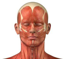 תרשים עצבים ומבנה העיניים והראש